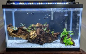 Nicrew ClassicLED on 10g planted tank
