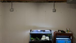 Fish Room Under Construction - Dedicated Circuit Installed