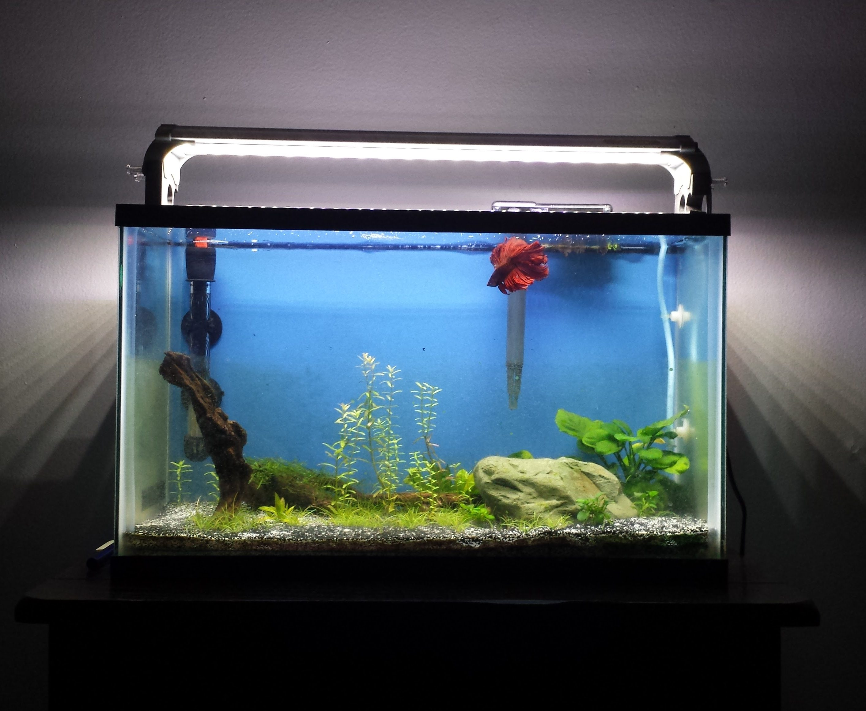 DIY Fishkeeping Blog