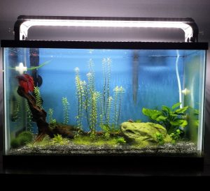 betta tank running aquaclear 20