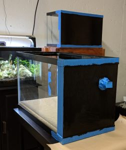 painted drilled aquariums