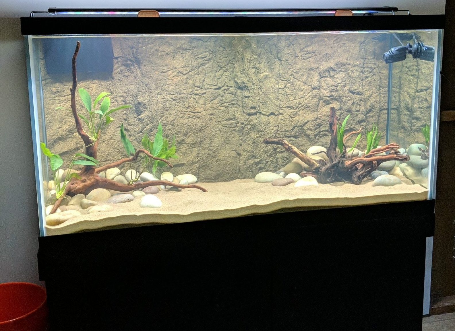 hardscaped 90 gallon