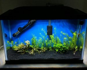 Planted 10 Gallon Lit by Marineland LED Hood