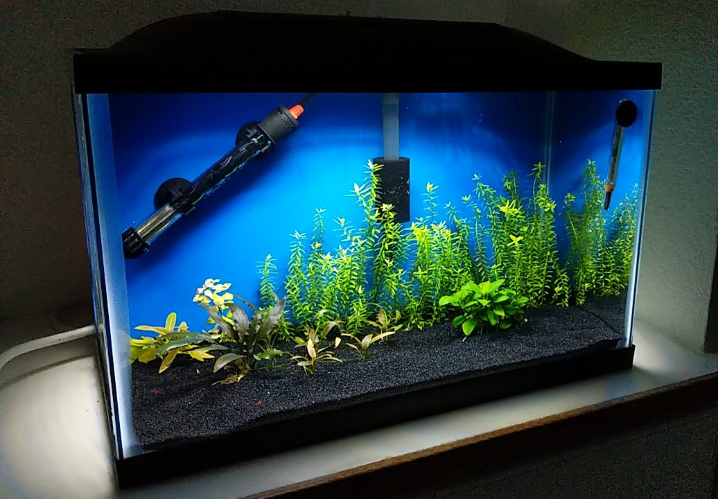 Planted 10 Gallon with Marineland LED Hood