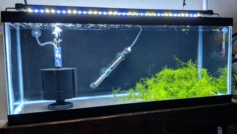 Endler Fry Tank Setup