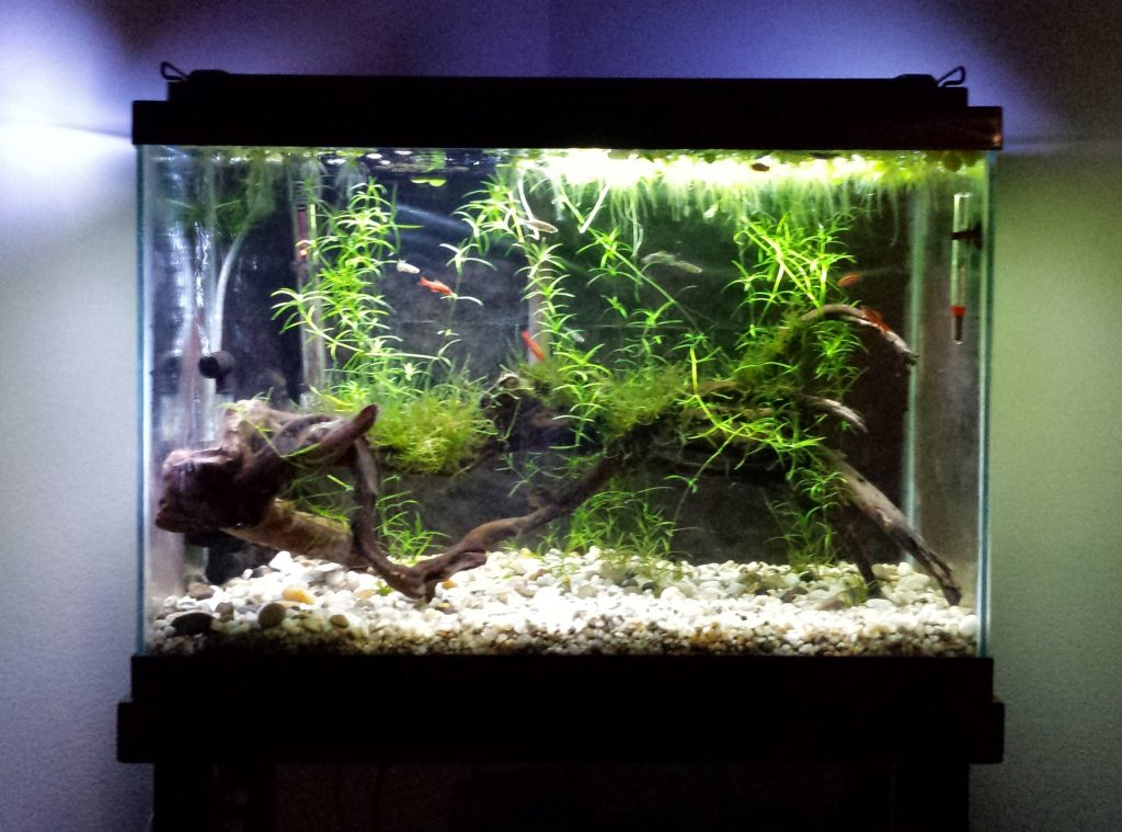 Aquarium Plants Archives - Odin Aquatics