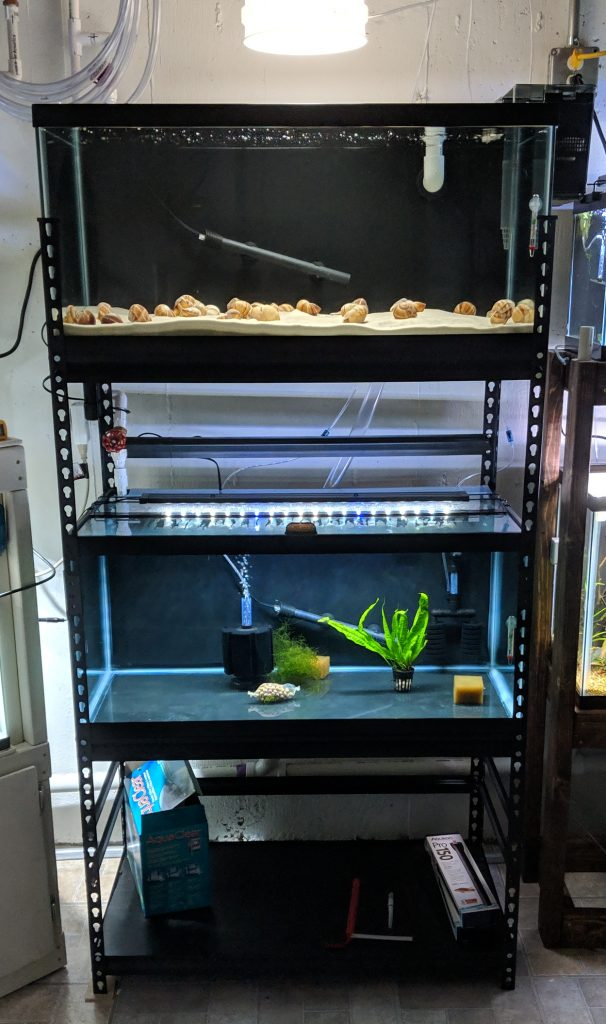 Aquarium Rack For Two 40 Gallon Breeders Odin Aquatics Hello all, i have a 40 gallon tank and its for one bearded dragon, smaug. aquarium rack for two 40 gallon