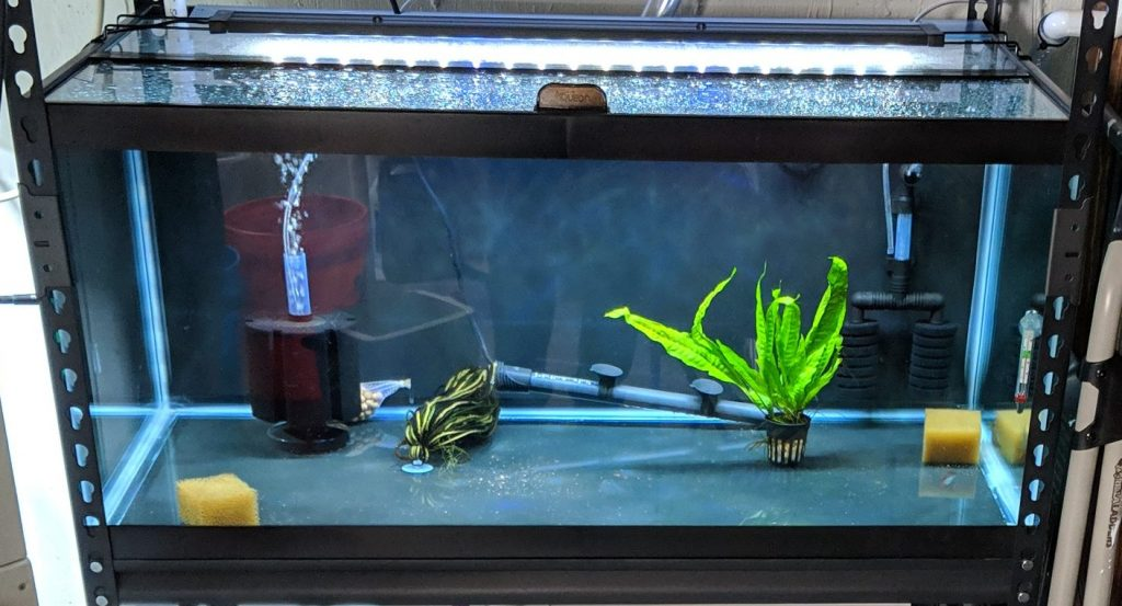 Breeding Aquarium