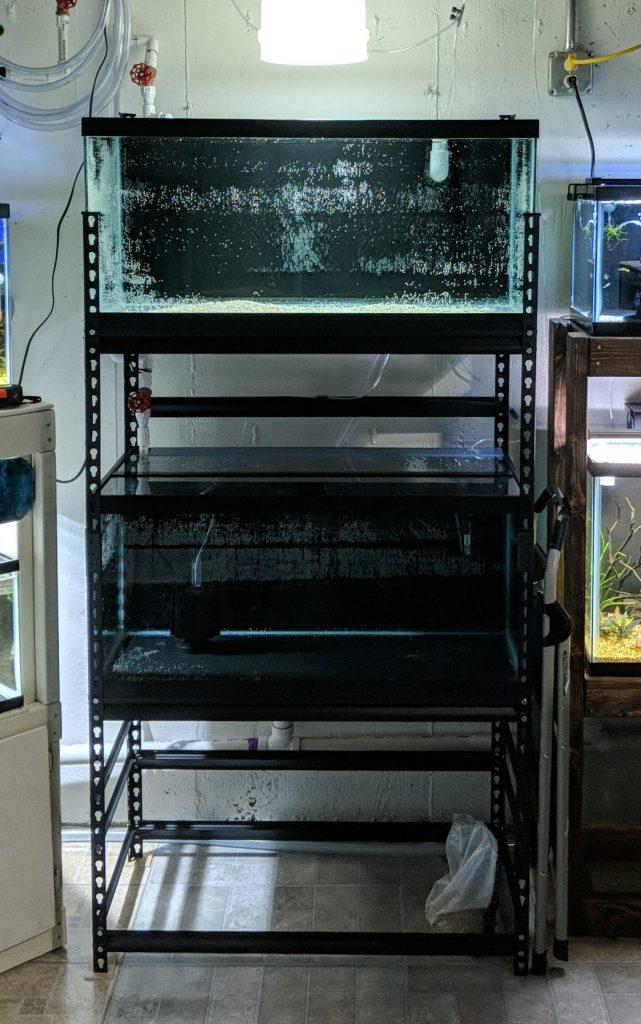 40 breeder rack