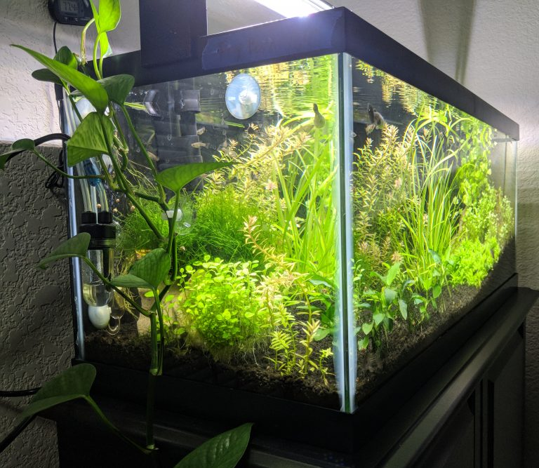 Pothos Plants: Add Natural Filtration to Your Aquarium