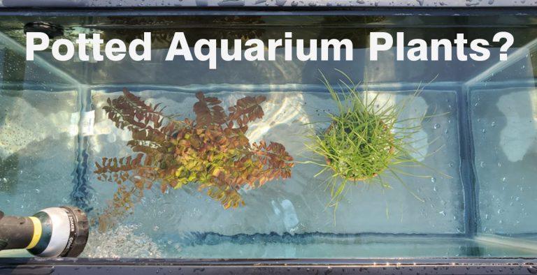 Adding Potted Plants to Your Aquarium