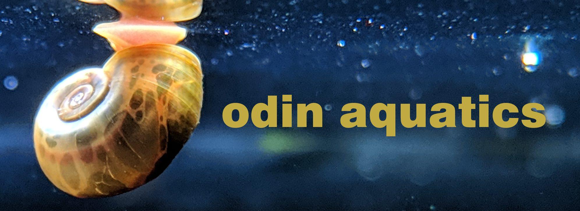 Odin Aquatics