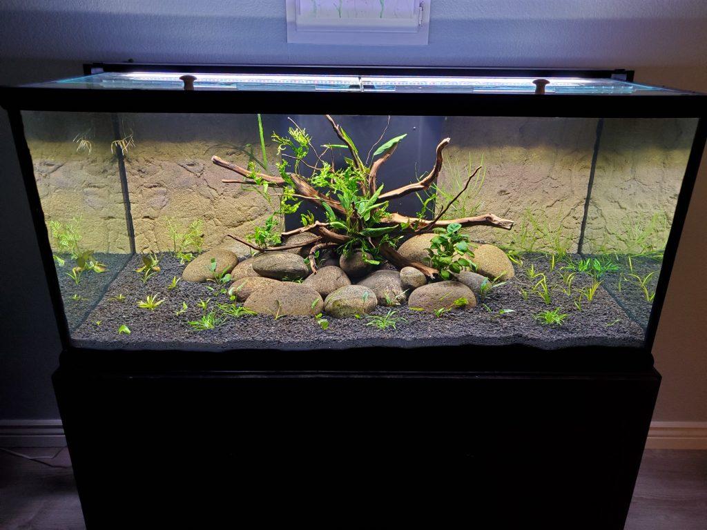 Newly scaped aquarium