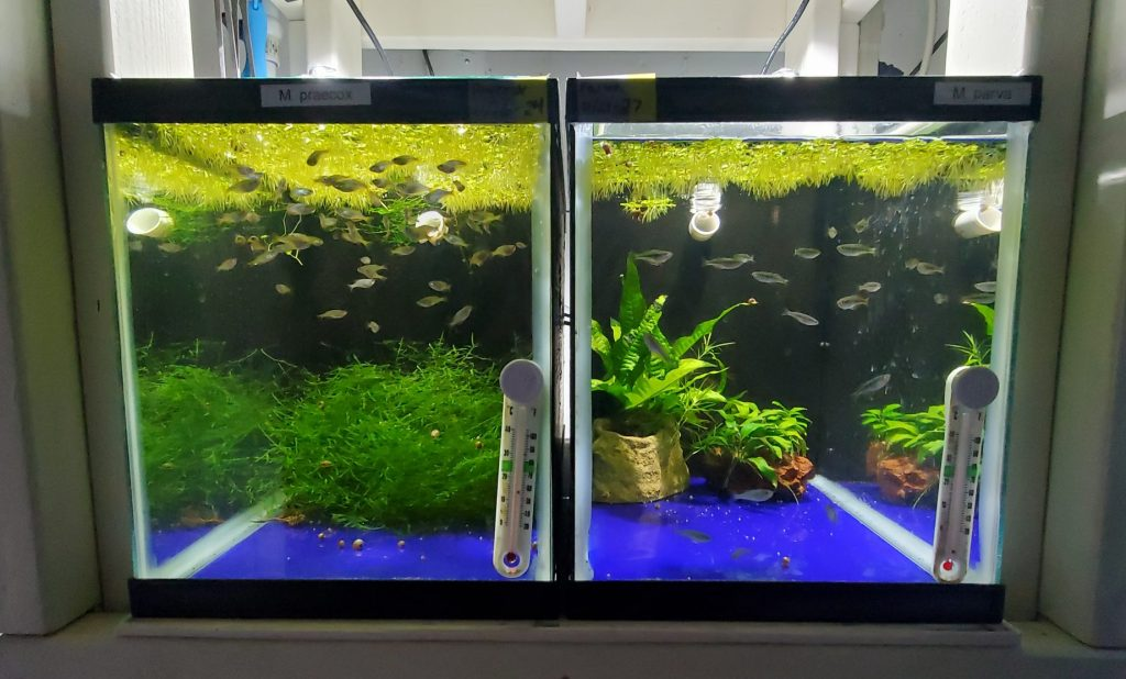 Fry Tanks with Air-Driven Matten Filters